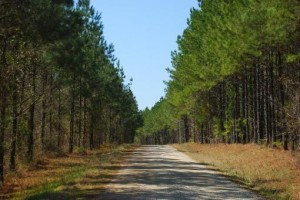 Example of the old dirt road...