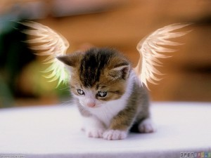 Angel Kitty